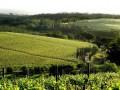 Green Mountain Walk Vineyards 1