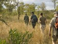 Kruger Guided Walk