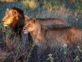 Lions KNP