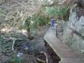 Walking Milkwood forest path,  Hermanus Walk