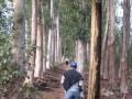 Walking Stellenbosch mountain, Cape Winelands Walk