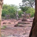 bushveld game walk