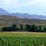 cederberg wine terroir.v01