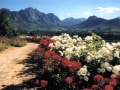 franschhoek-flowers