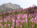 How to book,Cape Winelands Walk,Watsonias,Fynbos