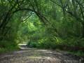 Knysna-Elephant-trail-1