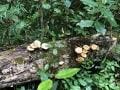 Knysna-Forest-1