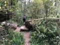 Knysna-Forest-2