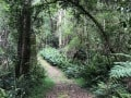 Knysna-Forest-3