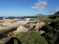 Cape Seashore vegetation on the Denis Heesom Trail