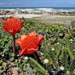 Agulhas National Park supports rich plant and bird life