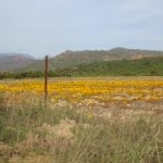 Boskloof area wild flowers
