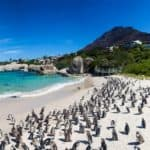 Penguin colony at Boulders beach, Simonstown.