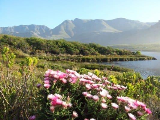 Kogelberg fynbos, mountain and river hiking