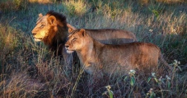 See the Big 5 with safari vehicle Kruger Park
