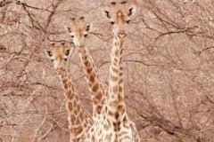 Wildlife on foot in the bushveld
