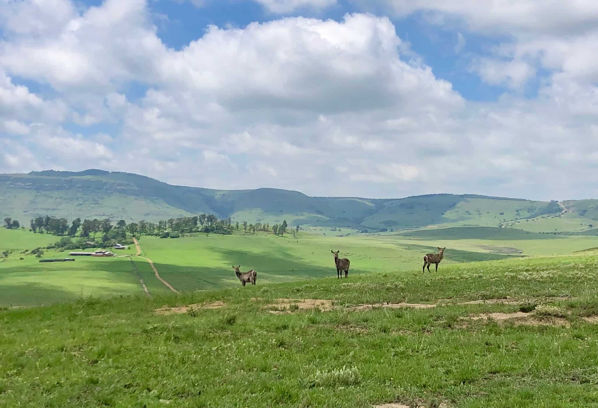 Drakensberg Giants Castle Hiking and wildlife experience