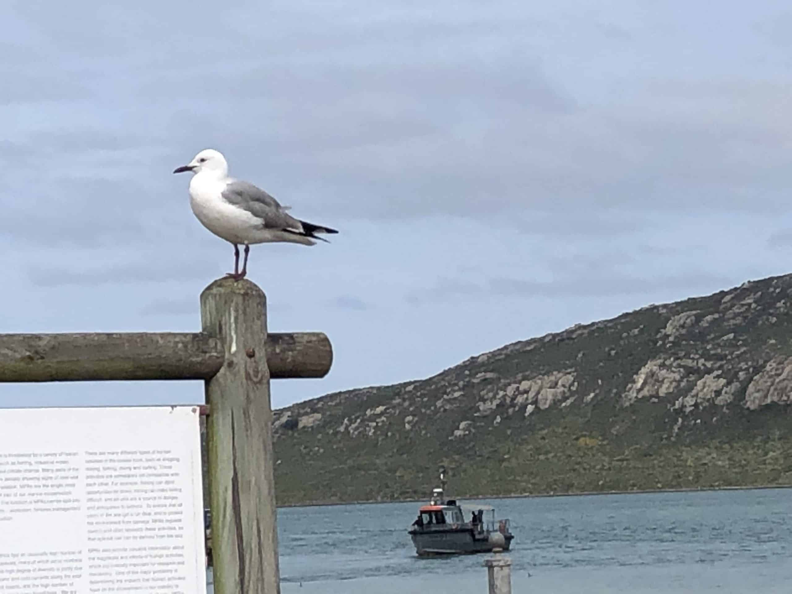 Cycling along Langebaan lagoon on the West Coast- known for its bird life