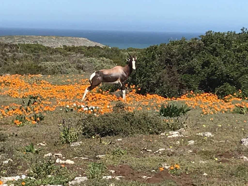 Spring flowers and antelope on West Coast cycling tour
