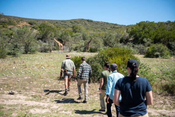 Fynbos landscape and wildlife-Garden Route game walk