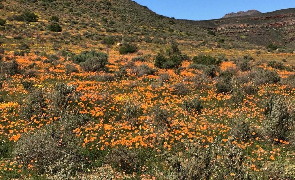 Flowers Cederberg hike