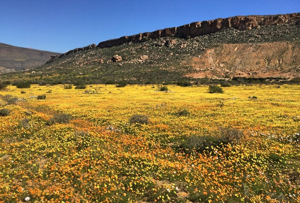 Cederberg wild flowers hiking in Spring
