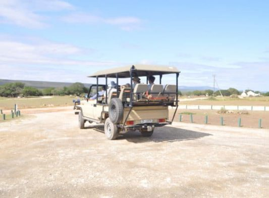 Fynbos and wildlife experience in open safari vehicle