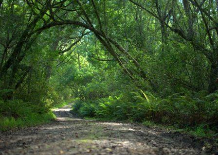 Knysna Elephant trail 1