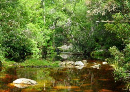 Knysna Elephant trail 3