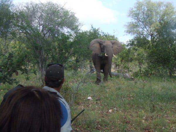 Wildlife hiking Kruger area