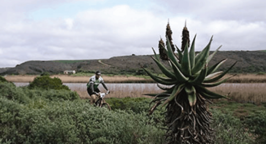 More than 260 bird species on Whale Coast cycling tour in De Hoop reserve